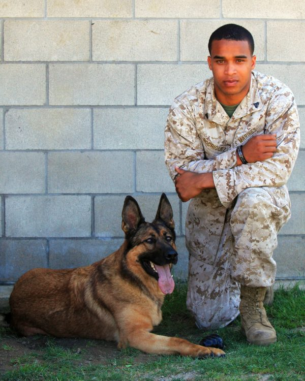 Cpl. Juan M. Rodriguez, military dog handler with 1st Law Enforcement Battalion, I Marine Expeditionary Force, kneels next to Lucca, a 8-year-old Belgian Malinois military working dog, next to the battalion's dog kennel at Camp Pendleton, Calif., July 2. Lucca deployed twice to Iraq and once to Afghanistan where she was injured by an improvised explosive device. The injury led to the amputation of her left front leg and retirement from military service. Rodriguez, Lucca's current handler, is scheduled to escort the veteran K-9 from the base to Finland where she will reside with Gunnery Sgt. Christopher Willingham, Lucca's original trainer.  During a turnover at O-Hare International Airport in Chicago, Ill., Lucca will be honored during a ceremony by American Airlines, which will provide transportation to Rodriguez and Lucca through its partnership with Air Compassion for Veterans. ACV is an organization that provides medically related air transport services to service members, veterans and their families. During her military service, Lucca uncovered more than 40 IEDs and saved countless lives.